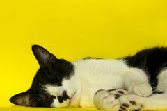 Czarnego kota relaksować Czarny kot na Żółtym tle Zdjęcia Stock