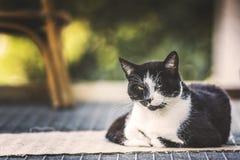 Czarnego kota relaksować Fotografia Royalty Free