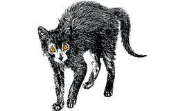 Czarnego kota rysunkowy wektor Zdjęcie Royalty Free