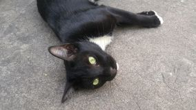 Czarnego kota snooze na podłoga Obrazy Royalty Free