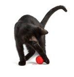 Czarnego kota sztuki Zdjęcie Royalty Free