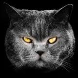 czarnego kota, twarz zdjęcia stock
