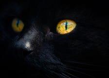 Czarnego kota twarz W szczególe Fotografia Royalty Free