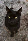 czarnego kota, zielone oczy zdjęcie stock