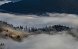 Czarnego lasu gór Landscapennature drzew mgła Niemcy Schwarzwald Schauinsland Obraz Royalty Free