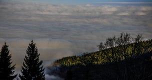 Czarnego lasu gór Landscapennature drzew mgła Niemcy Schwarzwald Schauinsland Zdjęcia Royalty Free