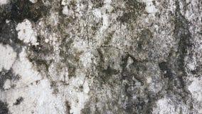 Czarnego mech tekstura Zdjęcia Stock