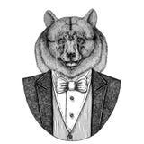 Czarnego niedźwiedzia amerykanina niedźwiedź Aper, knur, wieprz, dziki knur, wieprz, modnisia zwierzęca ręka rysujący wizerunek d obrazy stock