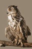 czarnego orła ciągnącego atramentu sowy ilustracyjny wektora Obrazy Royalty Free