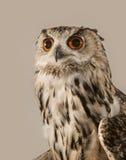 czarnego orła ciągnącego atramentu sowy ilustracyjny wektora Zdjęcie Stock