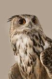 czarnego orła ciągnącego atramentu sowy ilustracyjny wektora Fotografia Stock
