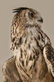 czarnego orła ciągnącego atramentu sowy ilustracyjny wektora Zdjęcie Royalty Free