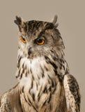czarnego orła ciągnącego atramentu sowy ilustracyjny wektora Obrazy Stock