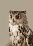 czarnego orła ciągnącego atramentu sowy ilustracyjny wektora Obraz Royalty Free