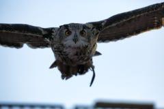 czarnego orła ciągnącego atramentu sowy ilustracyjny wektora Obraz Stock