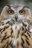 czarnego orła ciągnącego atramentu sowy ilustracyjny wektora Zdjęcia Stock