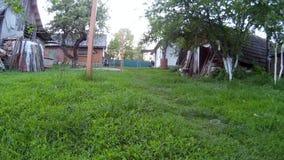 Czarnego psa bieg w kamerę przy domowym jardem Ukraina, Podillya, Khmelnytskyi zbiory