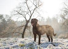 Czarnego psa obsiadanie w jesień lesie Obrazy Royalty Free