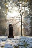 Czarnego psa obsiadanie w jesień lesie Zdjęcia Royalty Free