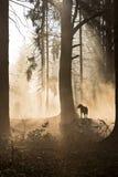 Czarnego psa obsiadanie w jesień lesie Fotografia Stock