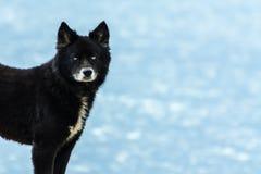 Czarnego psa pozycja na plaży obraz stock
