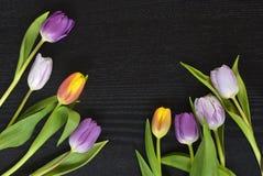 Czarnego wenge kopii przestrzeni drewniany pusty tło z kolorowymi tulipanami Fotografia Royalty Free