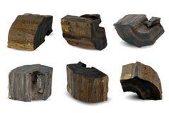 Czarnego Złocistego drewna kemuning hitam odizolowywający na bielu obrazy stock