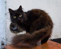 Czarnego zwierzę domowe kota złapany drzemanie Zdjęcia Royalty Free