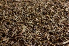 Czarnej herbaty tekstura, tło Fotografia Stock