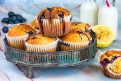 Czarnej jagody i cytryny muffins Zdjęcie Royalty Free