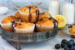 Czarnej jagody i cytryny muffins Zdjęcia Royalty Free