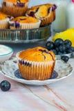 Czarnej jagody i cytryny muffins Fotografia Stock