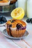 Czarnej jagody i cytryny muffins Obraz Royalty Free