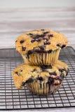 czarnej jagody jumbo muffins Zdjęcie Royalty Free