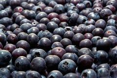 czarnej jagody organicznie świeży soczysty naturalny Zdjęcie Royalty Free