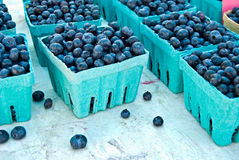 czarnej jagody uprawa Zdjęcia Stock