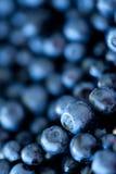 Czarnej jagody zbliżenie Fotografia Stock