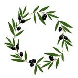 Czarnej oliwki wianek z zielenią opuszcza ilustracyjnego wektor Fotografia Stock