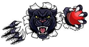 Czarnej pantery krykieta maskotki łamania tło Zdjęcia Royalty Free