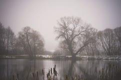 Czarni Adler drzewa w mgle, Riese, Vilnius okręg, Lithuania Zdjęcie Royalty Free