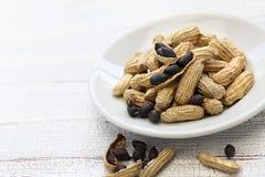 Czarni arachidy zdjęcia royalty free