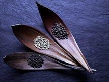 Czarni, Biali i Fragrant stosy Pieprzowe adra w Suchych liści lejach na purpura kamienia tła powierzchni, zdjęcia stock