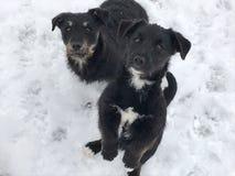 Czarni dziecko psy na śniegu fotografia stock