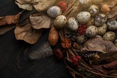 Czarni jajka w gniazdeczku suche gałąź na czarnej desce Wielkanoc styl zdjęcie royalty free