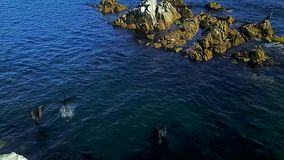 Czarni kormorany zdejmują od kamienia po środku morza w trybie zwolnione tempo zbiory