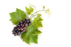 Czarni winogrona z liśćmi odizolowywają na białym tle Zdjęcia Stock