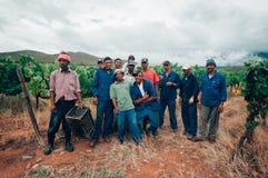 Czarni winogrono zbieracze, Robertson, Południowa Afryka Obrazy Stock