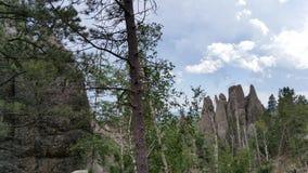 Czarni wzgórzy drzewa Fotografia Royalty Free
