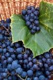 Czarni zgod winogrona w łozinowym koszu Obrazy Royalty Free