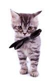 czarny łęku kota szyi target2192_0_ Obrazy Stock